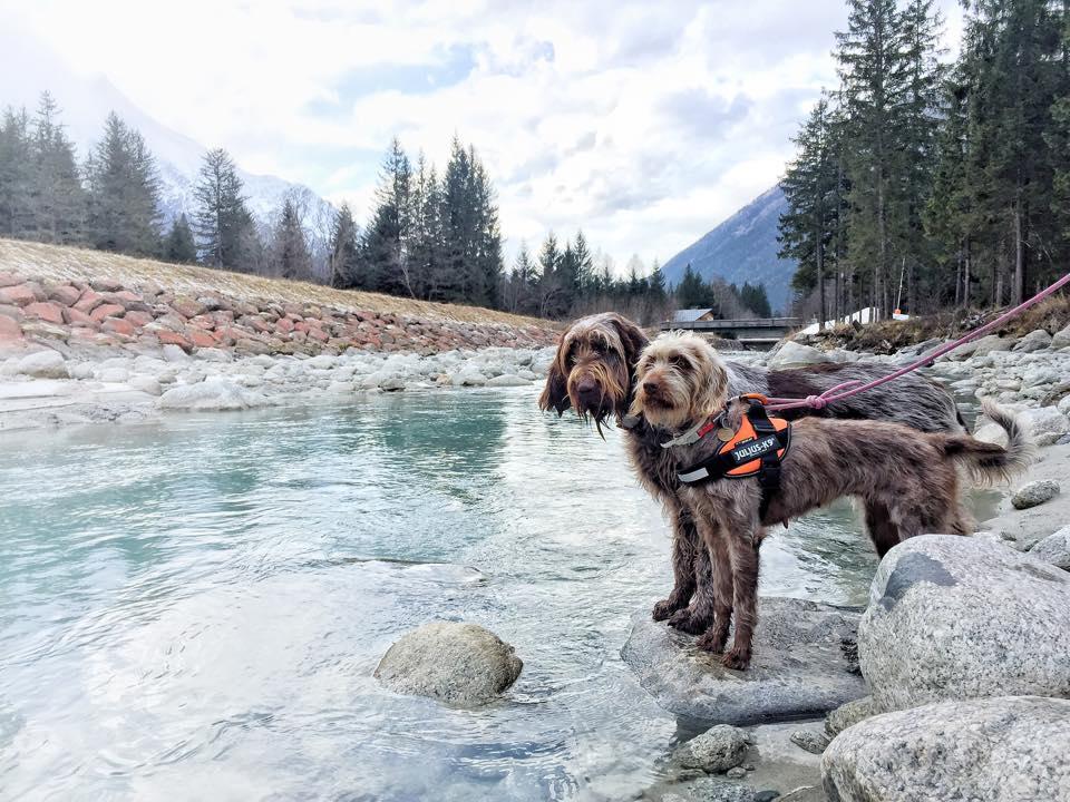 Lola enjoys her walks with her friend Daphne