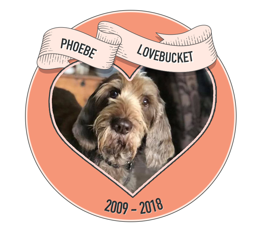 In memory of Phoebe