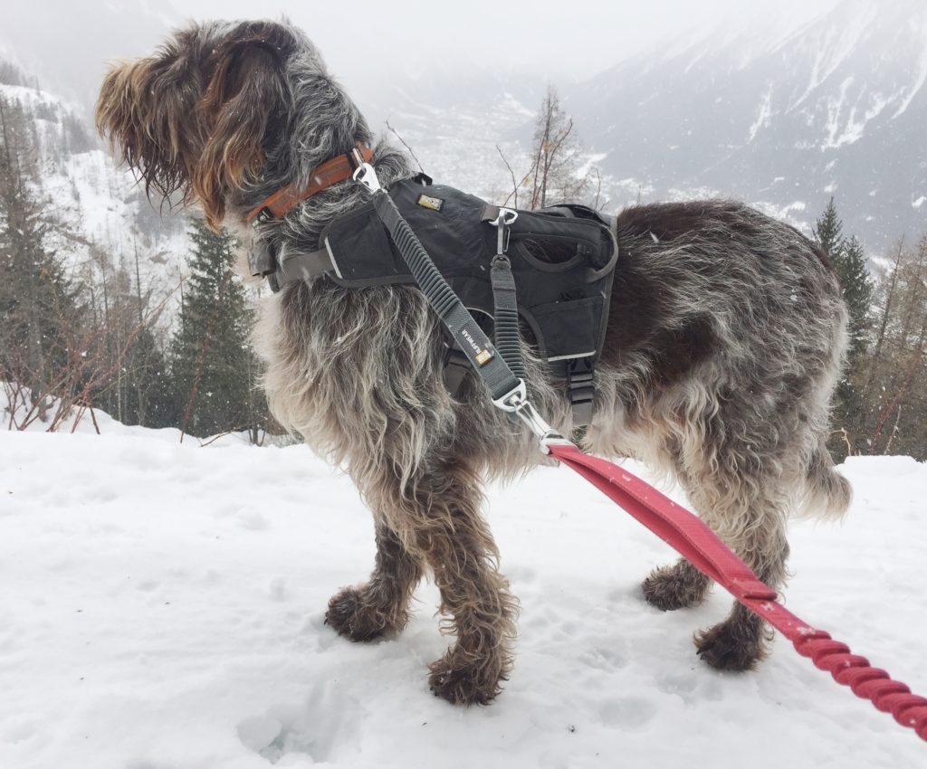 Ruffwear Webmaster harness with coupler to collar